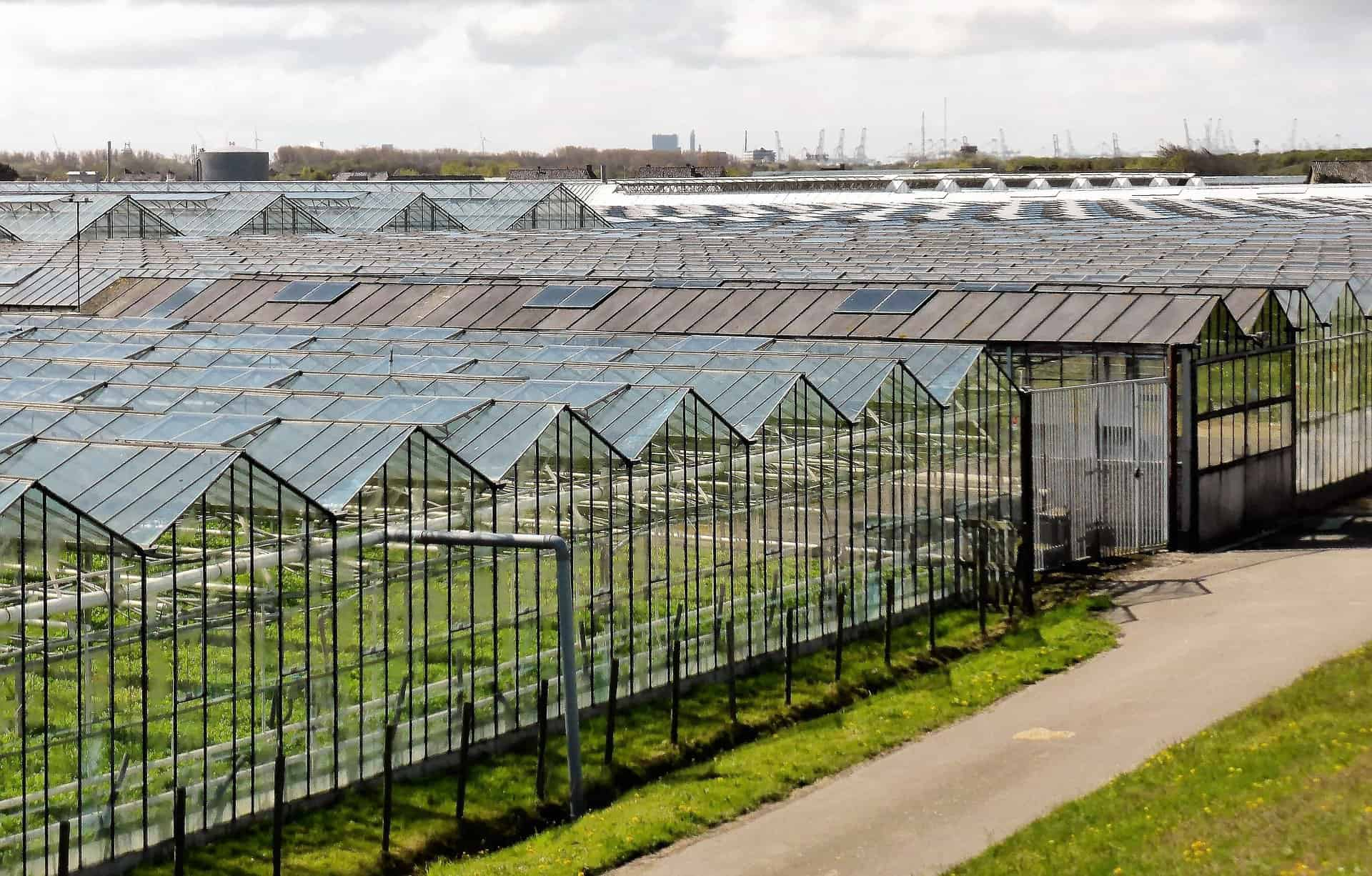 zonnepanelen in Westland
